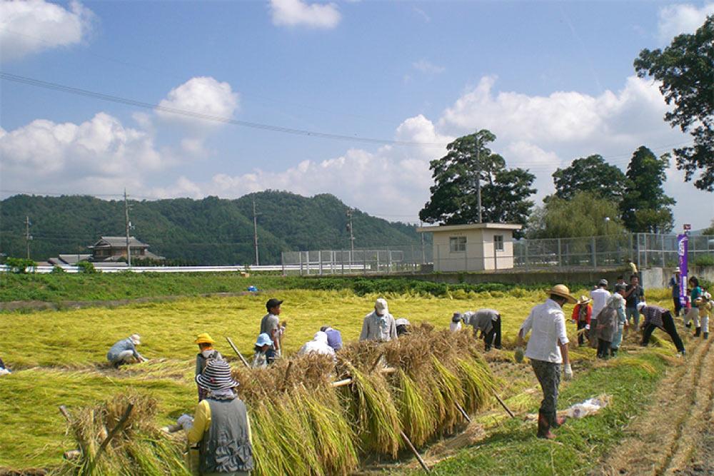 rurikei-farm01